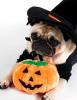 joyeux halloween a tous!!!