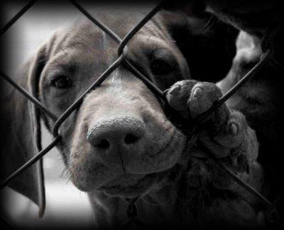 L'abandon d'animaux
