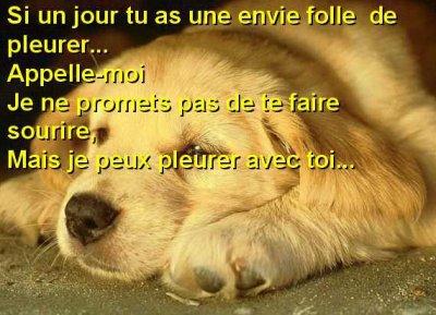 Poeme Avk La Photo Dun Chien La Brune Du2 4