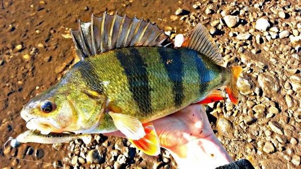 November's Fishes !
