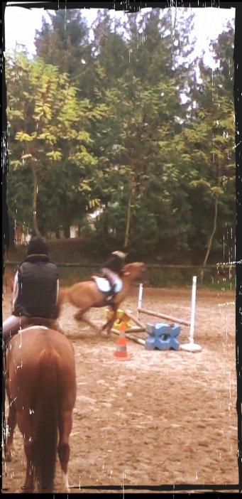 le cheval et une gros passion
