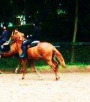Photo de moi-equitation