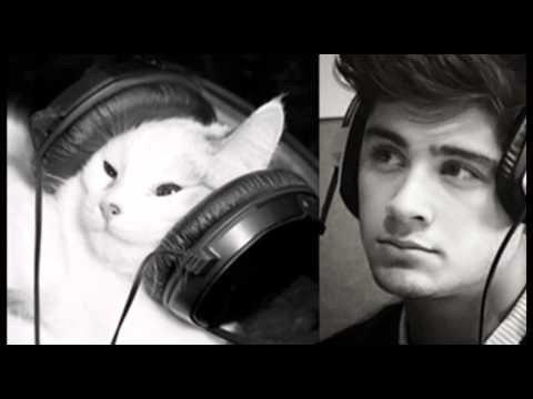 Tout le monde ressemble à un chat