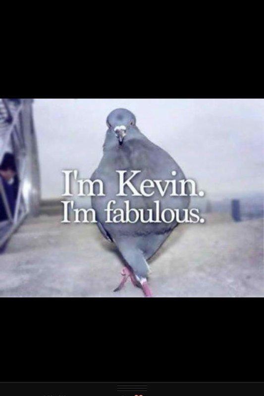 Fabulous Kevin LOL
