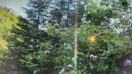 Jean FERRAT parmi les les fleurs de chez lui