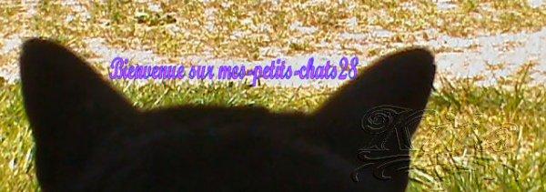 *• ♥ Bienvenue sur mon blog ♥ •* >> mes-petits-chats28 © <<