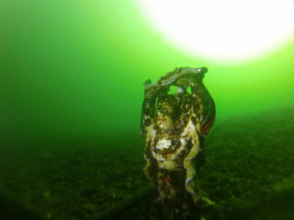 Souvenir de plongée ! barrage de l'eau d'heure Belgique