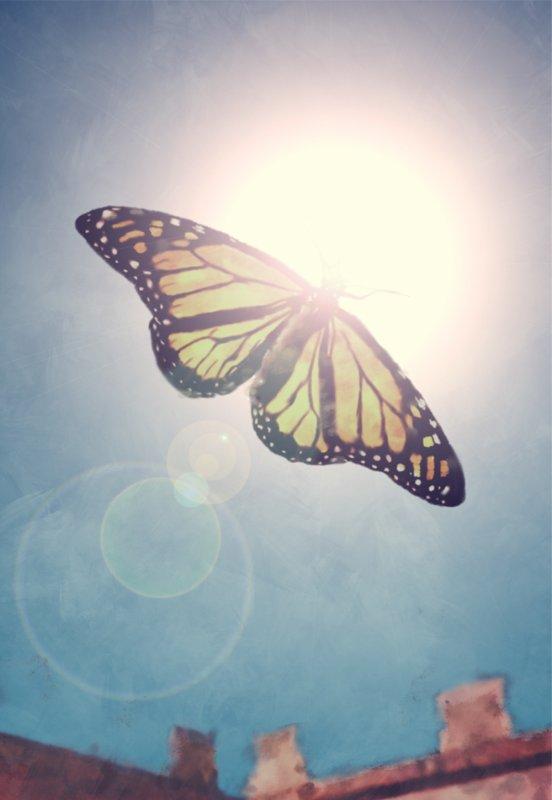 Papillon, symbole de liberté