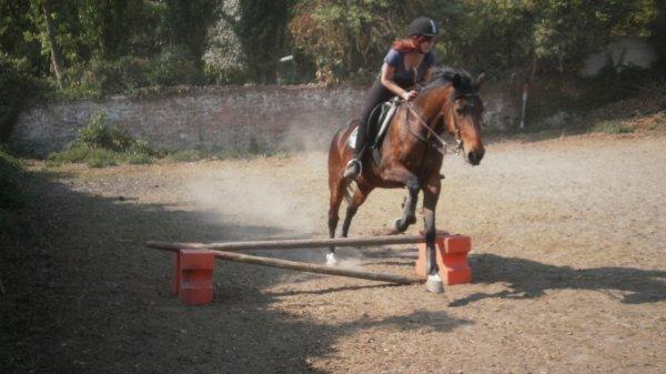 Les chevaux, l'équitation : Toute ma vie ♥.