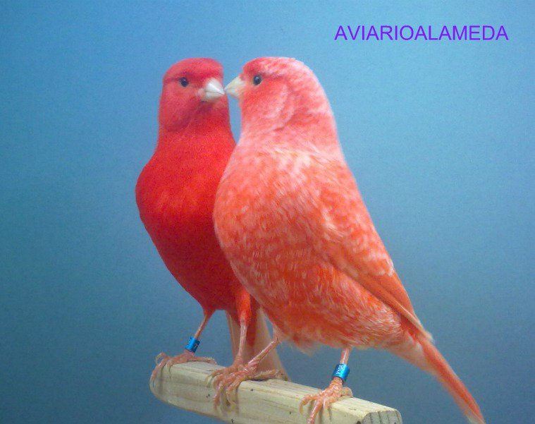 aviarioalameda