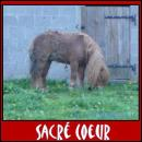 Photo de Sunny-Sacre-Coeur