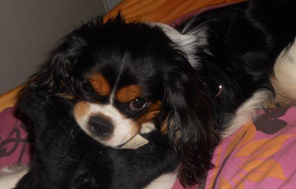 Mon petit Doudou.. ♥
