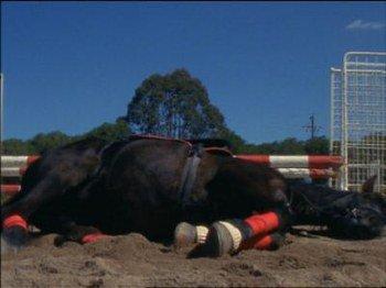 Pauvre cobalt - Grand galop le cheval volant ...