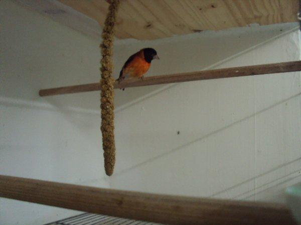 Algumas das minhas aves
