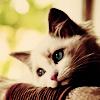 Photo de world-pet
