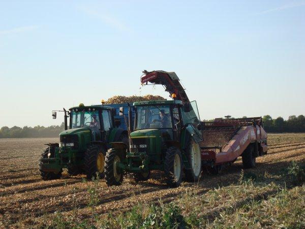 Ramassage d'oignon dans le 45 2010