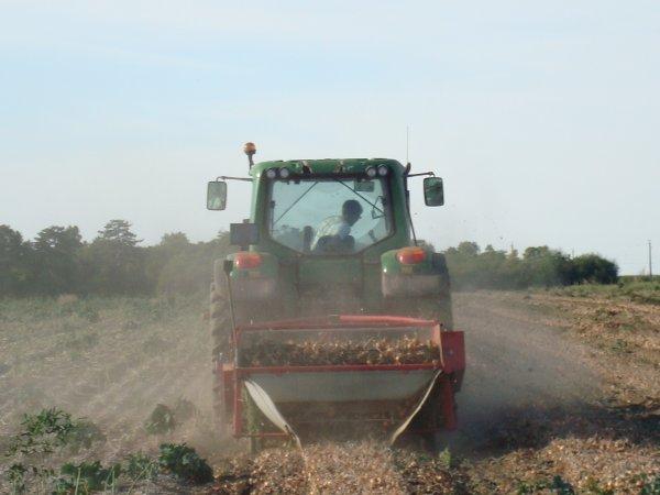 Effeuillage d'oignon dans le 45 2010