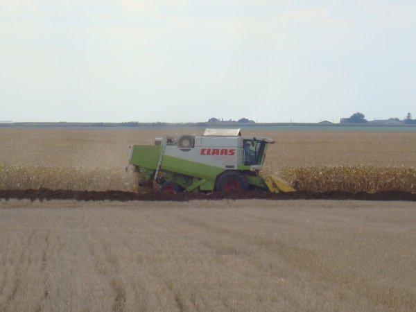 Moisson de maïs 45 2010