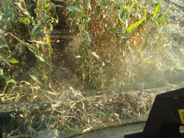 Moisson de maïs dans le 45 2011