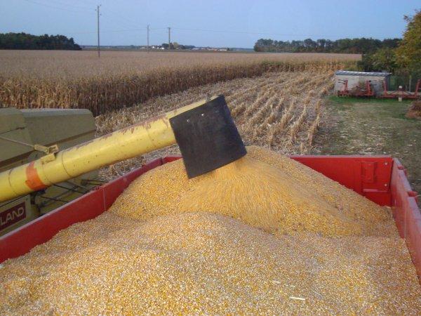 Moisson de maïs chez mon voisin 2011