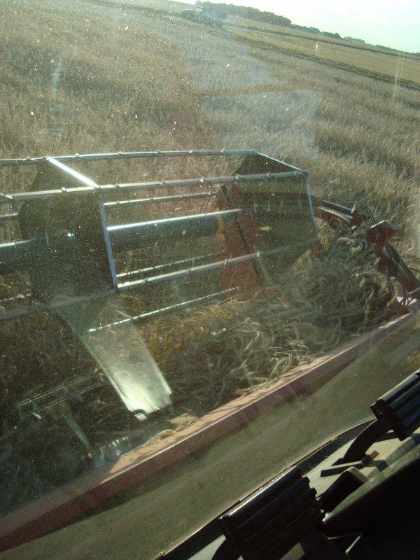 Moisson de seigle 2012 dans le 45