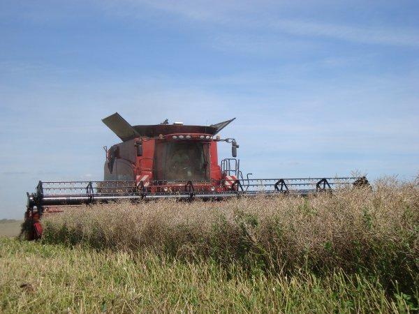 Moison du colza 2012 dans le 45