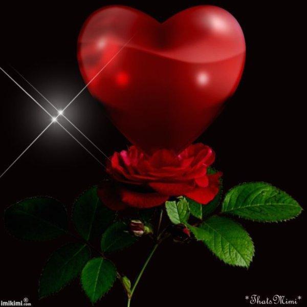 Une rose de mon ❤️,rien que pour toi.