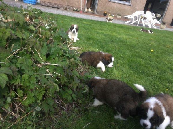 Petite promenade dans le jardin avec maman et Missy