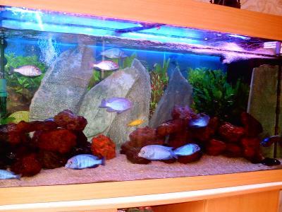 Decor Aquarium Avec Ardoises