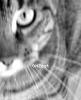 ONEcat