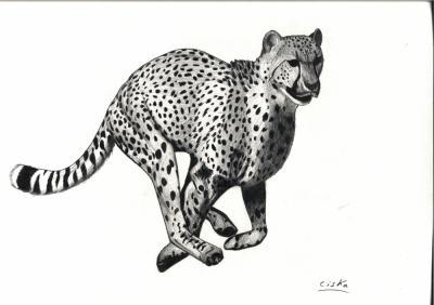 Gu pard voil mes dessins en ligne - Guepard dessin ...