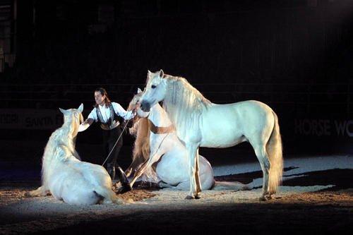 Le Salon du cheval (: