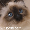 WindMelody