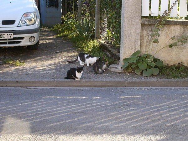groupe de chat