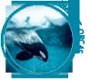 Imagine-Orcas