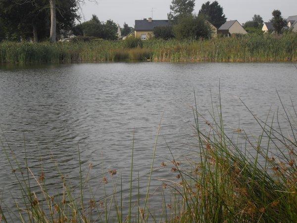 petit 24h00 sur le petit étang de 0,5ha à 5 minutes à pied de chez moi .