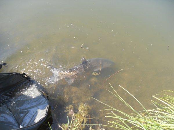 Pêche de journée à l'étang du hérisson.