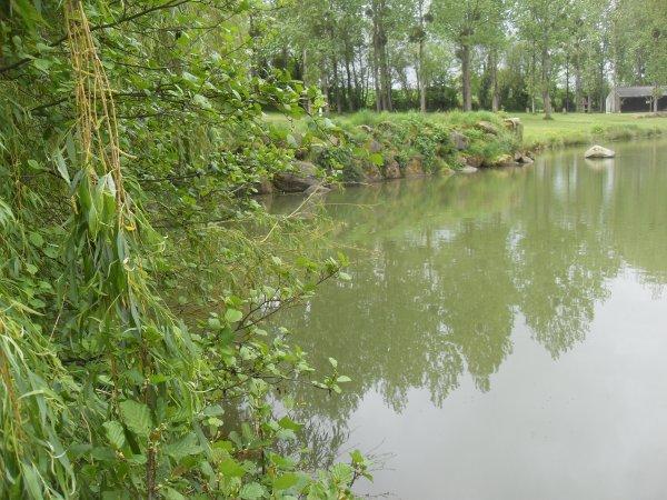 Petite Pêche de jour à l'étang du hérisson.