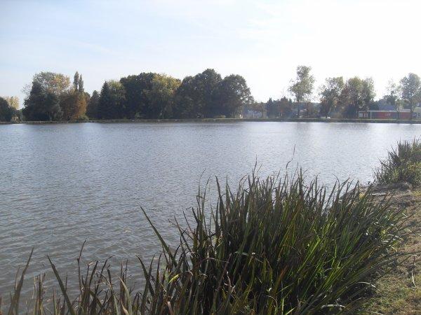 Petite pêche de journée à l'étang de la croix nouette.