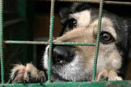 l'Abandon. Le droits des animaux !