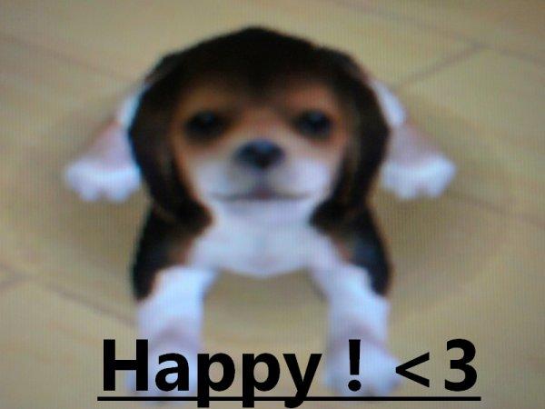 Happy, le roi du bonheur. ♥