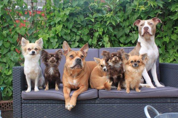voici la petite famille <3
