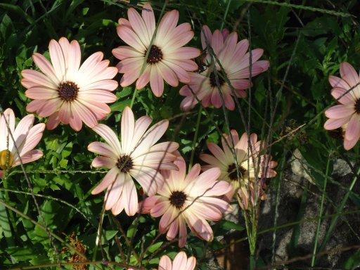 Les fleurs avant les fleurs après .