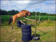 Et oui, Ione n'est pas qu'un simple poney de rando :)