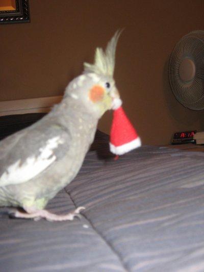 Le premier Noël de Monsieur Poupou!