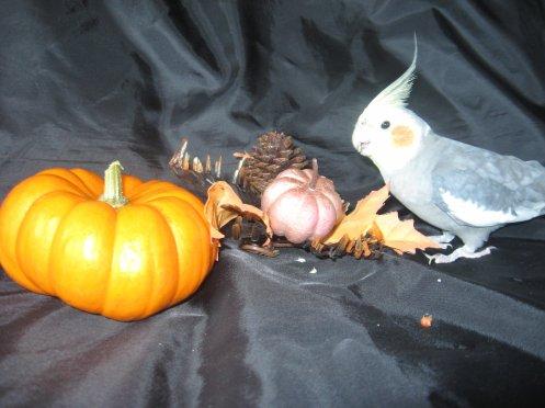 PhotoShoot de Poupou! (Halloween 2010!)