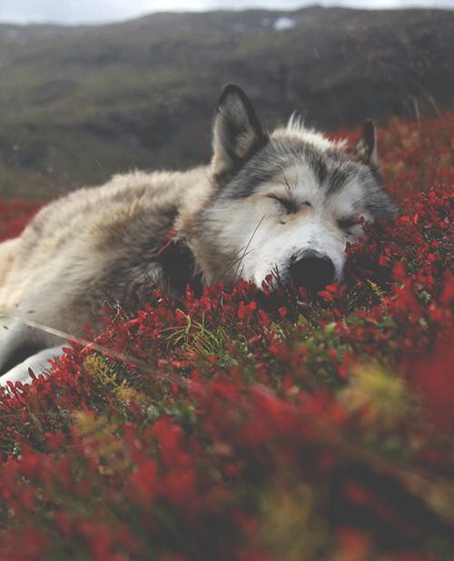 Il faut hurler avec les loups, si l'on veut courir avec eux. ~
