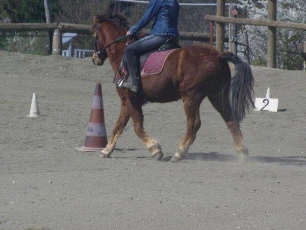Un cavalier reste positif avec son cheval ♥