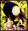 LOVE--KYANDII