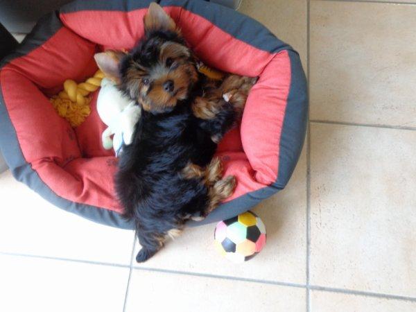 lola notre adorable chienne